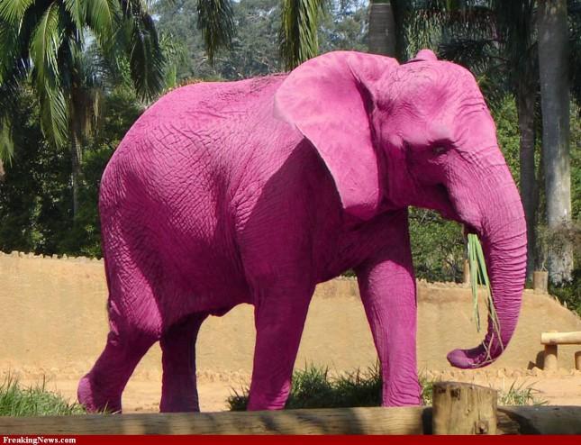 pink-elephant-733153